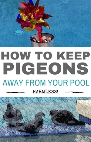 How To Keep Pigeons Away From Your Pool Deeply Home